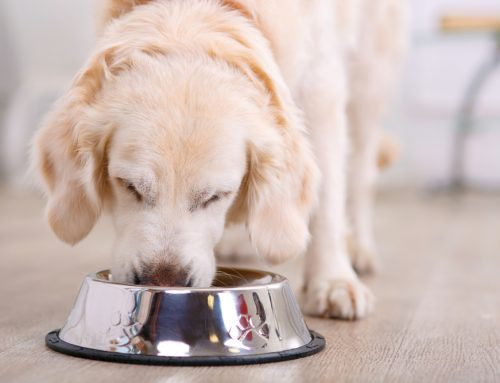 Food and Heart Disease in Pets: What's the Correlation