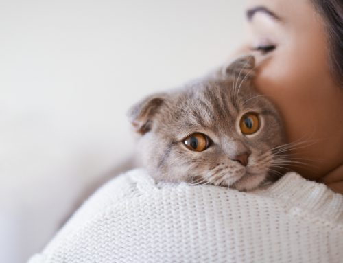 Does Your Pet Have Cancer? 10 Signs of Cancer in Cats and Dogs