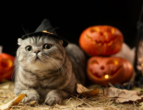 How to Prevent Halloween Horrors for Your Pet
