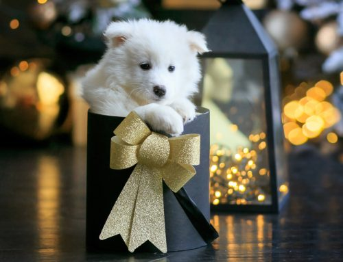 How to Choose the Perfect Puppy for Your Family at Christmas